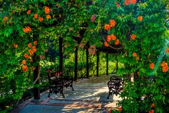Beautiful calm, flowers entwined pavillion. With two vintage benches stock image