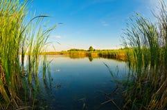 Beautiful calm lake. In Siemianowka, Poland royalty free stock photo