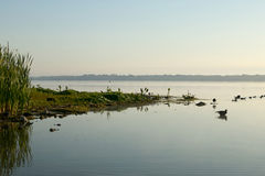 Beautiful calm morning lake and waterfowl Royalty Free Stock Images