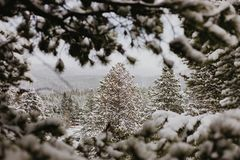 Beautiful Calm and Peaceful Frozen Cold Winter Season Snow in Breckenridge Colorado Landscape Scene of Fir Pine Trees in Outdoor N. Chilly Fresh Mountain Air in stock image