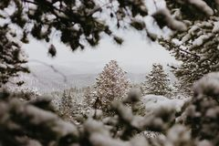 Beautiful Calm and Peaceful Frozen Cold Winter Season Snow in Breckenridge Colorado Landscape Scene of Fir Pine Trees in Outdoor N. Chilly Fresh Mountain Air in royalty free stock image