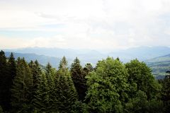 Beautiful Calmness in Forest in front of the Alps Mountain. Beautiful Calmness in Green Forest in front of the Alps Mountain near Bregenz, Austria stock images