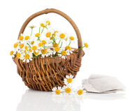 Beautiful camomile flowers in basket with tee bag Stock Image