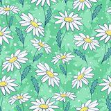 Beautiful camomile flowers seamless pattern. Cartoon background Royalty Free Stock Photos