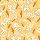 Beautiful camomile flowers seamless pattern yellow Royalty Free Stock Photography