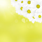 Beautiful camomile on yellow background Stock Photo