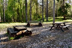 Camping place in a forest. Beautiful camping place in a forest royalty free stock photo