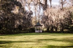 Beautiful canopy of live oak trees and resurrection ferns with spanish moss by a white gazebo at the Magnolia plantation in royalty free stock image