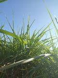 Sky with blue anf greeb grass royalty free stock images