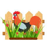 Beautiful card with a cartoon rooster with fence and grass with flowers. Vector illustration Royalty Free Stock Images