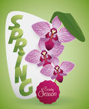 Beautiful Card with Orchids for Springtime, Vector Illustration Stock Photos