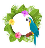 Beautiful Card with Parrot Ara, Colorful Flowers Blossom Stock Image