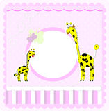 A beautiful card with two giraffes Royalty Free Stock Photos