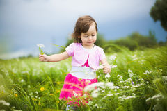 Beautiful carefree girl playing outdoors in field. With high green grass. little child picking up wild flowers Royalty Free Stock Image