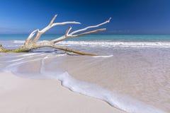 Beautiful Caribbean beach royalty free stock photos
