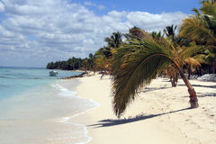 Beautiful Caribbean beach. On Saona island Stock Photo