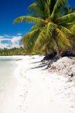 Beautiful caribbean beach with white sand Stock Image
