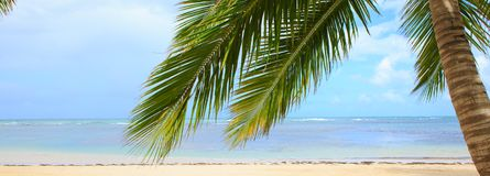 Palm tree on white tropical beach. Travel background. Royalty Free Stock Image