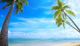 Palm trees on tropical beach. Royalty Free Stock Photography