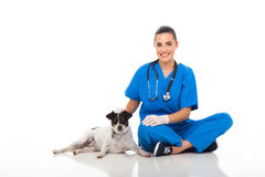 Vet doctor dog Royalty Free Stock Image