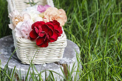 Beautiful carnation flowers in a white wicker basket Stock Photography