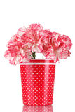 Beautiful Carnations In Red Cup Stock Photo
