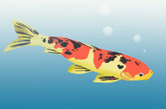 Beautiful carp fish. In clear water with bubbles Royalty Free Stock Photo