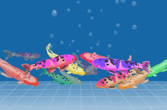 Beautiful carp fish masses. Beautiful color of carps in the pond Stock Images