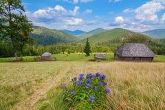 Beautiful Carpathian mountains landscape. Stock Image