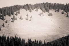 A beautiful Carpathian scenery in grayscale Stock Images