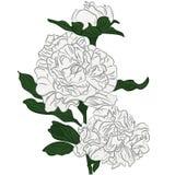 Beautiful cartoon white peonies flower Stock Photos