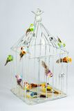 Beautiful carved cage with birds Stock Photo