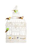 Beautiful carved cage with birds isolated Stock Photo