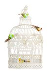 Beautiful carved cage with birds isolated Stock Photography