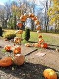 Orange halloween pumpkins Stock Photos