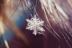 Beautiful  carved snowflake hanging on the fur hairs Royalty Free Stock Image