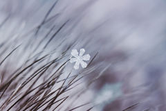 Beautiful  carved snowflake hanging on the fur hairs Stock Image