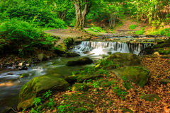Beautiful cascade comes out of a forest river Royalty Free Stock Image