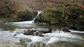 Beautiful cascade comes out of a forest river stock video