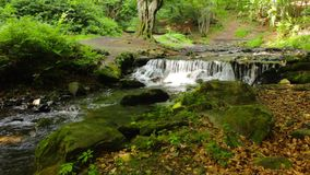 Beautiful cascade comes out of a forest river stock video footage