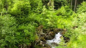Beautiful cascade comes out of a forest river. Beautiful and clean little cascades in the forest near a huge rock covered with moss stock footage