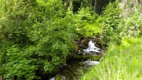 Beautiful cascade comes out of a forest river. Beautiful and clean little cascades in the forest near a huge rock covered with moss stock video footage