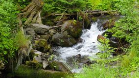 Beautiful cascade comes out of a forest river stock footage