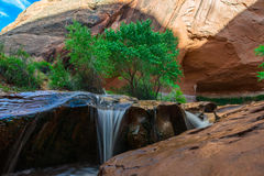 Beautiful Cascade in Coyote Gulch Royalty Free Stock Photography