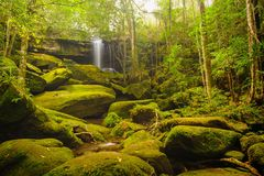 Beautiful cascade falls over mossy rocks. Stock Images