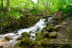 Beautiful cascade waterfall in green forest Stock Photos