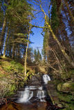 Beautiful cascading waterfall benneath the pine trees, Nant Bwrefwy, Upper Blaen-y-Glyn Royalty Free Stock Images