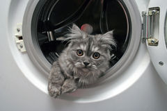 Beautiful cat. Cat in laundry machine Royalty Free Stock Photo