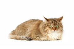 Beautiful cat Stock Images