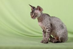 Beautiful cat Stock Photos